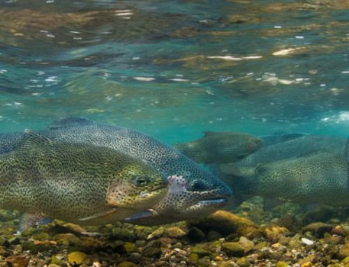 Feeding the Fish in Warm River: Fun things to do in Yellowstone