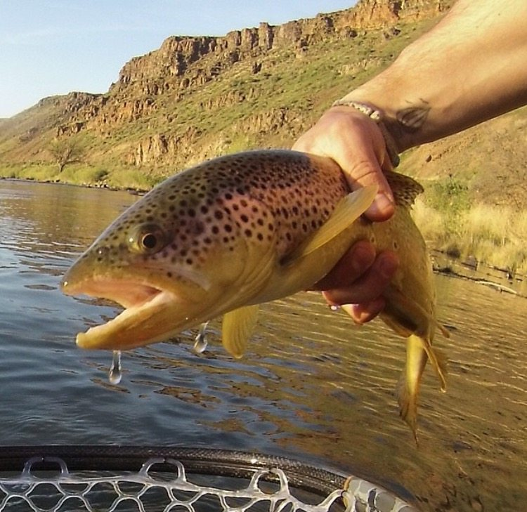 Owyhee river fishing report may 16 2016 trr outfitters for Owyhee river fly fishing