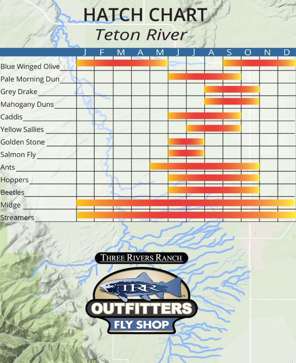 Teton River Hatch Chart