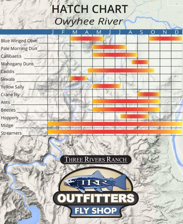 Owyhee River Hatch Chart - Fly Fishing Oregon