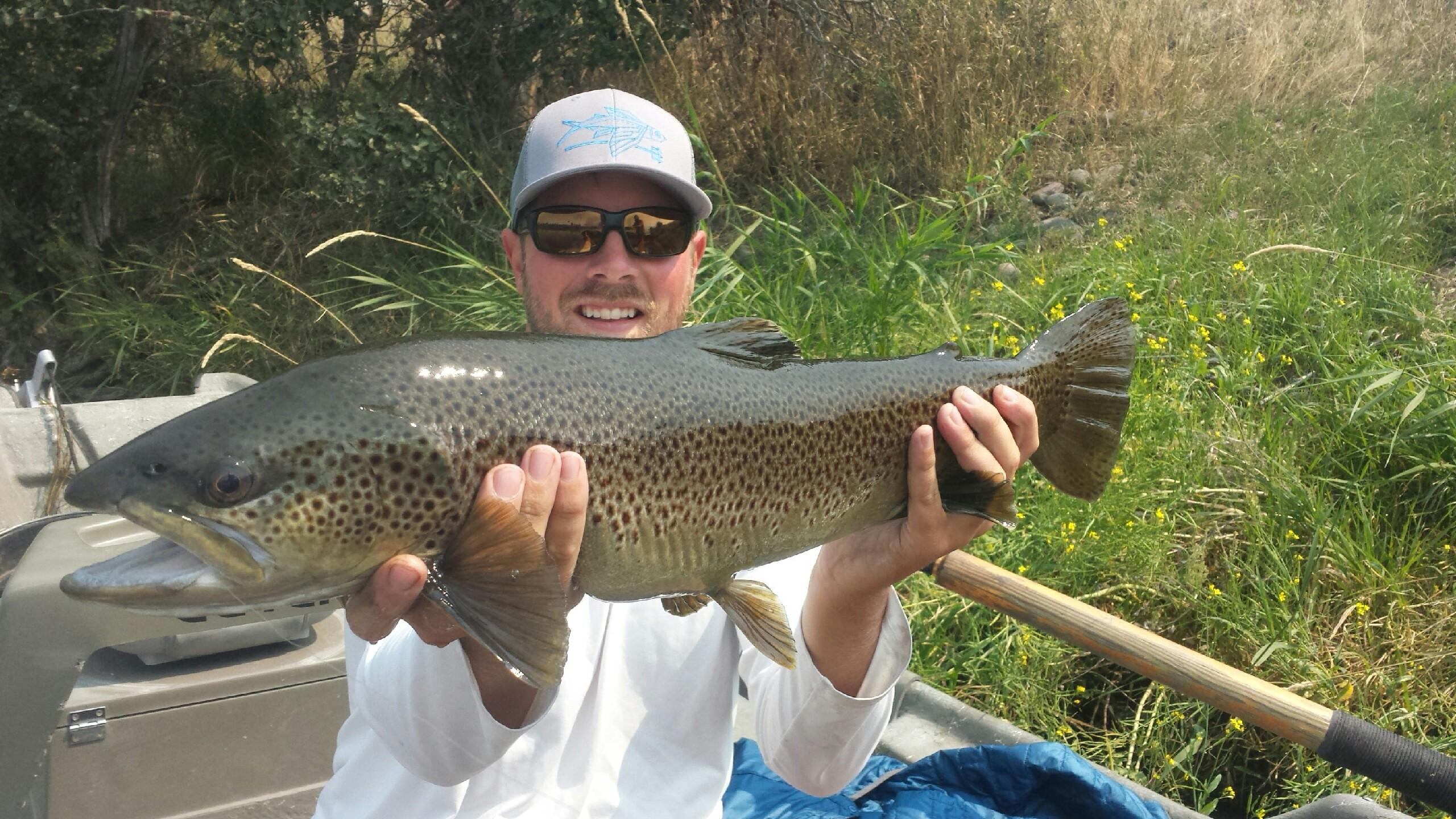 Henrys fork of the snake river trr outfitters for Snake river fishing report