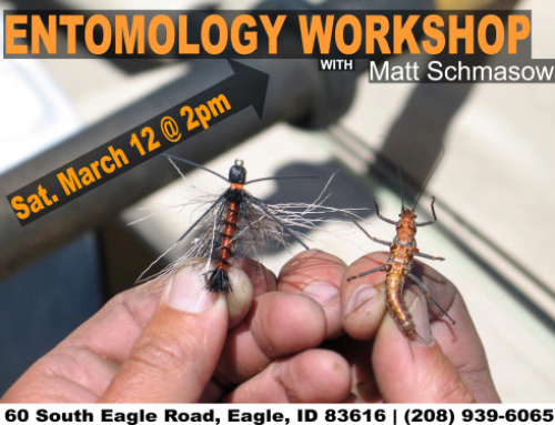 Entomology Workshop Series #1: The Big Three (Stones, Mayflies, & Caddis)