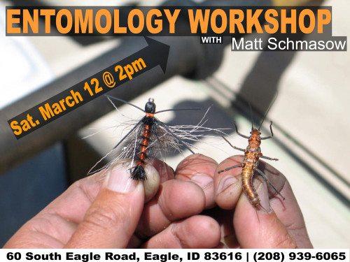 Entomology Workshop Series 1 Stoneflies Mayflies Caddis
