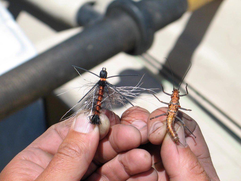 Boise Fly Shop Entomology Class in Eagle, Idaho