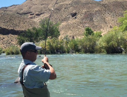Henry 39 s fork fly fishing report for october idaho fly for Owyhee river fly fishing