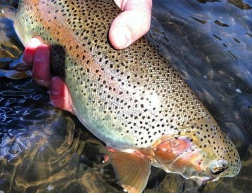 Boise River Fly Fishing Report – February 1, 2017