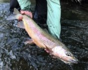 Boise River Fly Fishing Report – Aug 25