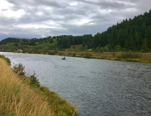 Henry's Fork Fishing Report – Sept 20