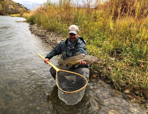 Late Fall Fishing Report for the South Fork, Henry's Fork and Teton