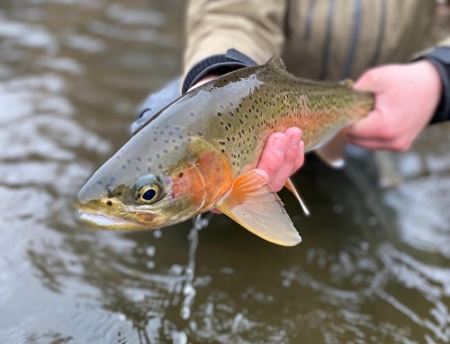Boise Area Fly Fishing Updated 1/13/2020 by Rob Griggs a.k.a the trout sniper