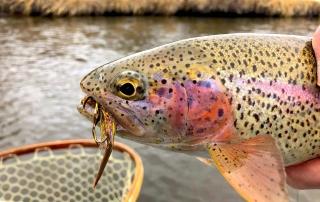 Fly Fishing Eastern Idaho - Rainbow Trout